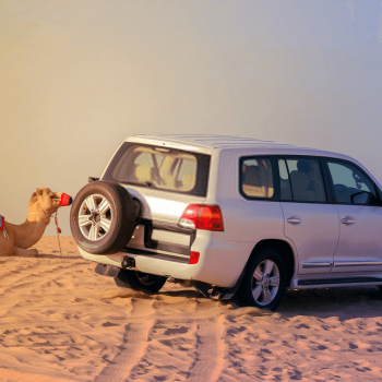 Landcruiser with camel
